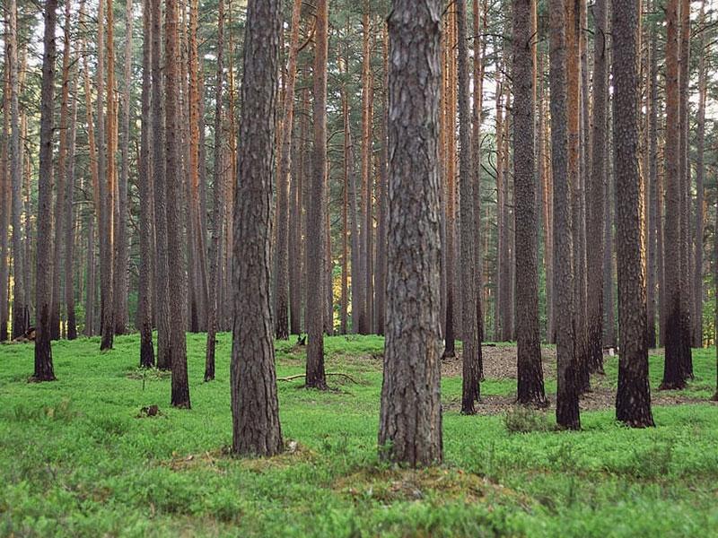 Curso guía-acompañante de paseos de bosques saludables pinares
